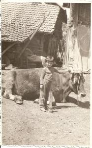 4. si mama vitelului